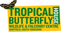 Testimonial – Tropical Butterfly House, Wildlife and Falconry Centre
